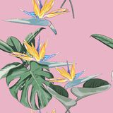 Encalhe o papel de parede sem emenda alegre da obscuridade tropical - folhas do teste padrão do verde das palmeiras e floresça o  ilustração do vetor