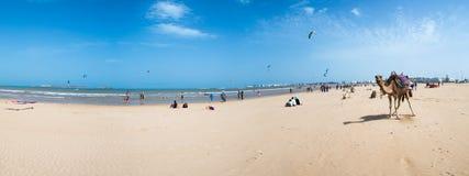 Encalhe, surfistas do papagaio e um camelo em Essaouira fotos de stock royalty free