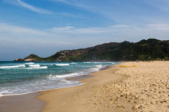 Encalhe a toupeira (toupeira do praia) em Florianopolis, Santa Catarina, Brasil Fotografia de Stock
