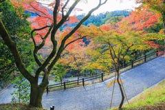 Encamine abajo a un parque con el fondo de los árboles del otoño Foto de archivo