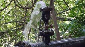 Encanamento estourado em Forest Slow Motion tropical filme