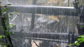 Encanamento estourado na floresta tropical video estoque