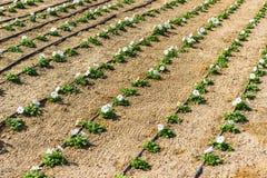 Encanamento nas flores molhando do gramado fotos de stock royalty free