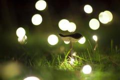 Encantada de la cerda Fotografía de archivo libre de regalías