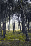 Encantado de Bosque Imagens de Stock