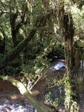 Encantado de Bosque Foto de Stock Royalty Free