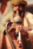 Encantador de la cobra Fotografía de archivo libre de regalías