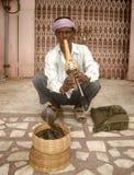 Encantador de serpiente, Jaipur, la India Imagen de archivo libre de regalías