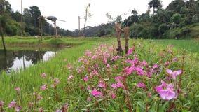 Encanto desta terra bonita Fotografia de Stock Royalty Free