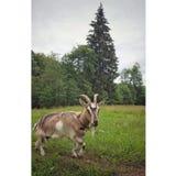 Encanto do país animal Imagem de Stock Royalty Free