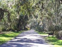 Encanto meridional Imagen de archivo