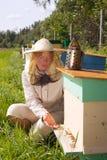 Encargado de la abeja. Imágenes de archivo libres de regalías