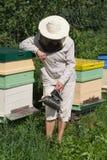 Encargado de la abeja. Foto de archivo