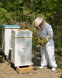 Encargado de la abeja foto de archivo libre de regalías