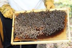 Encargado de la abeja con la célula de la miel Fotografía de archivo