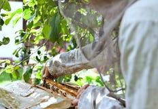 Encargado de la abeja con la colonia de la abeja Foto de archivo libre de regalías