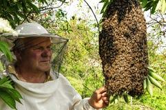 Encargado de la abeja con un enjambre de abejas Fotos de archivo