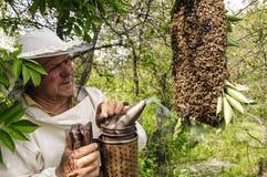 Encargado de la abeja con un enjambre de abejas Imagenes de archivo