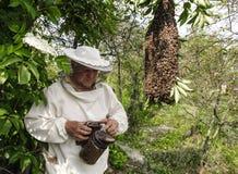 Encargado de la abeja con un enjambre de abejas Foto de archivo libre de regalías