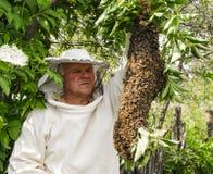 Encargado de la abeja con un enjambre de abejas Imagen de archivo libre de regalías