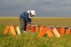 Encargado de la abeja en el trabajo Fotos de archivo libres de regalías