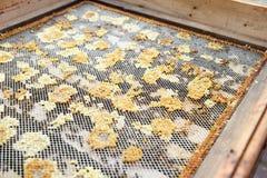 Encargado de la abeja que mira marcos de la colmena de la abeja de la miel Fotos de archivo