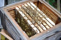 Encargado de la abeja que mira marcos de la colmena de la abeja de la miel Fotos de archivo libres de regalías