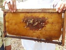 Encargado de la abeja que trabaja en la producción Imágenes de archivo libres de regalías