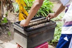 Encargado de la abeja y producto de la miel Fotografía de archivo libre de regalías
