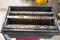 Encargado de la abeja y producto de la miel Foto de archivo libre de regalías