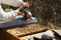 Encargado de trabajo de la abeja con el fumador Fotos de archivo