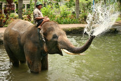 Encargado del elefante Fotos de archivo