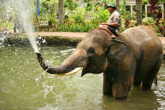Encargado del elefante Foto de archivo libre de regalías