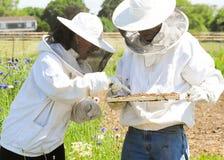 Encargados de la abeja Foto de archivo libre de regalías