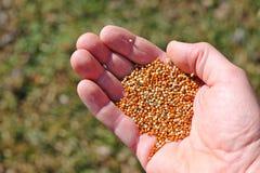 Encemencement de graine de printemps image libre de droits