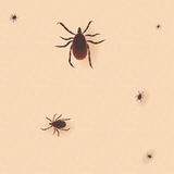 Encephalitis tick. Mite skin dust parasite vector icon illustration.  Stock Photography