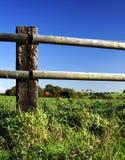 Encerre a cerca e os cavalos Foto de Stock