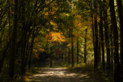 Enchanted Autumn Forest Royalty Free Stock Image