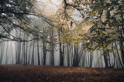 Enchanted autumn forest with fog Stock Photography