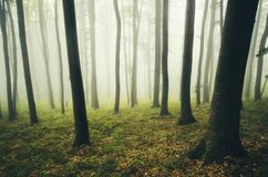 Enchanted autumn forest with mysterious fog Stock Image