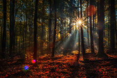 Enchanted Autumn Forrest Royalty Free Stock Photography
