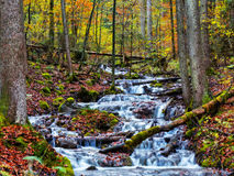 Enchanted Autumn Forrest Creek Royalty Free Stock Images