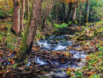 Enchanted Autumn Forrest Creek Stock Photography