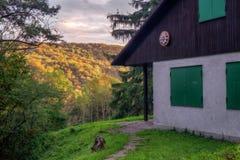 Enchanted Autumn Forrest Stock Image