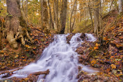 Enchanted Autumn Forrest Stock Photography
