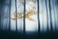 Enchanted autumn woods with mist royalty free stock image