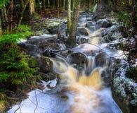 Enchanted creek in dark woods Stock Image
