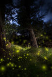 Enchanted Dark Forest. With Fireflies stock image