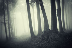Enchanted dark forest with fog on halloween Stock Image