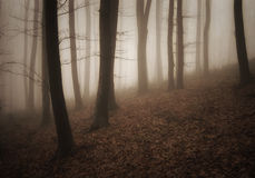 Enchanted dark spooky forest with fog in late autumn Stock Photography